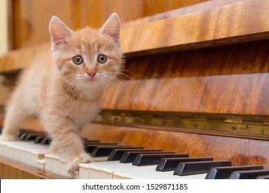 Funny kitten is sitting on the piano. Piano keyboard and kitten. Funny pets.