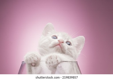 Funny kitten in studio on a pink background