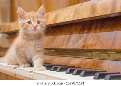 Funny kitten walks on the piano keyboard. The kitten plays the piano. Funny cats at home.