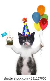 Funny Kitten Wishing You a Happy Birthday