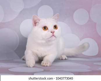 funny kittens on pink background