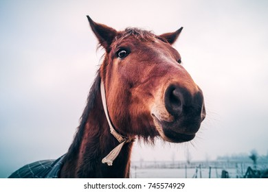 Funny large head of a happy friendly horse looking close straight into the camera during freezing cold winter. Animal friends on a white snowy farm.