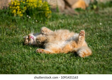 Funny lazy cat relaxes on the garden.