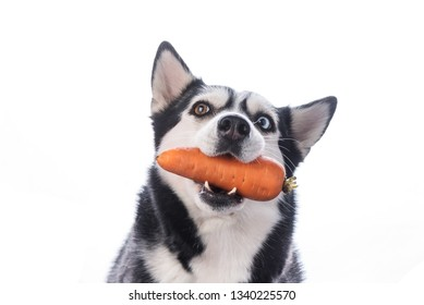 Funny lazy-eyed dog with carrots in the teeth, dog diet, spring, vitamin. White background