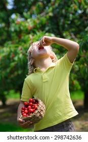 Funny little boy eating fresh picked cherry in cherry garden