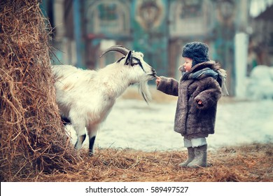 Funny little boy sees a goat the first time and touching him with a finger in winter. Image with selective focus and toning