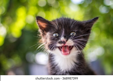 Funny little cat with a happy expression outdoor.Animal love and care concept.