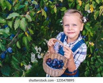 Funny little child girl with basket full of plums standing on the ladder