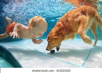 Funny little child play with fun and train golden labrador retriever puppy in swimming pool, jump and dive deep down underwater. Active water games with family pets, popular dog breeds like companion.