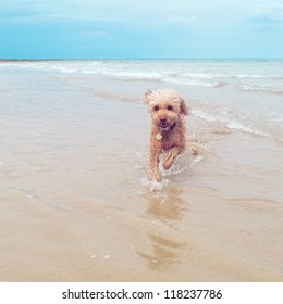 The funny little dog at the surf beach