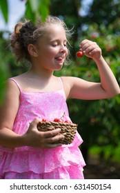 Funny little girl eating fresh picked cherry in cherry garden
