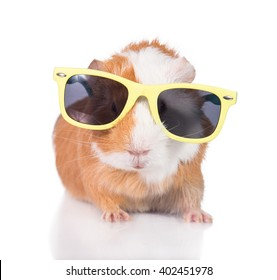 Funny little guinea pig with sunglasses isolated on white