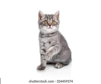 Funny little kitten looks up, isolated