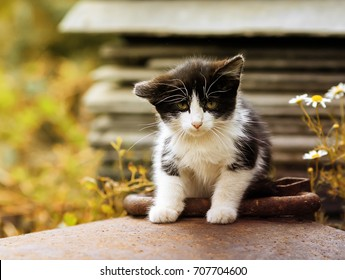 funny little kitten with sad eyes sitting on the street on a Sunny day
