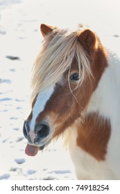 funny little pony with tongue sticking out