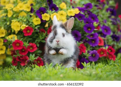 Funny little rabbit sitting in the flowerbed
