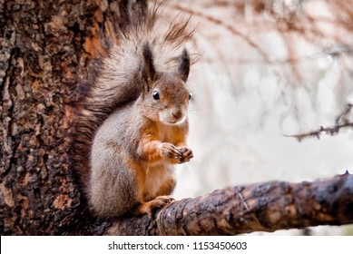Funny little  squirell so cute