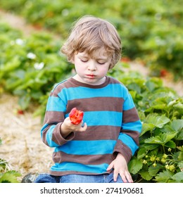 Funny little toddler child picking and eating strawberries on organic bio berry farm in summer, on warm sunny day. Harvest fields in Germany.