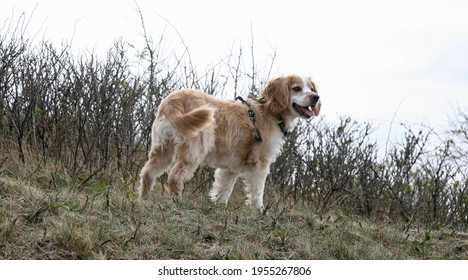A funny looking dog on the hillside