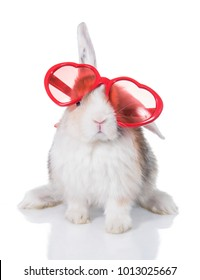 Funny lop eared rabbit wearing heart shaped glasses, isolated on white