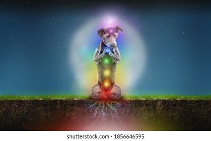 Funny meditation concept of a dog sitting on the grass practicing a grounding technique to harvest the energy of the earth into her seven chakras