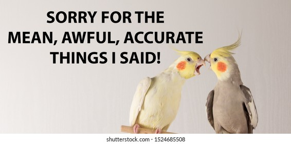 "funny memes, parrots fighting ""SORRY FOR THE MEAN , AWFUL, ACCURATE THINGS I SAID"""