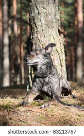 Funny mixed breed dog lying on the ground in forest