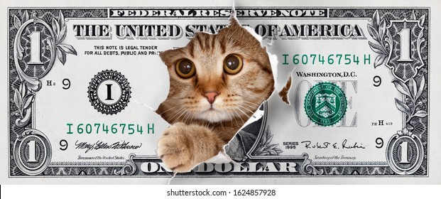 Funny money one cat dollar design