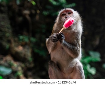 Funny monkey enjoying an ice cream stolen from a tourist. Picture was made at the Batu Caves in Kuala Lumpur where there are a lot of cheeky and rude monkeys.