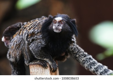funny monkey lives in tropical park