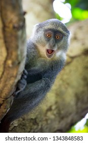 funny monkey look from tree brunch in forest