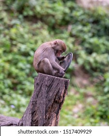 Funny monkey looking in the mirror. Setting the position of the mirror.