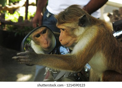 Funny monkey looks in the mirror and sits on motorbike. Setting the position of the mirror.