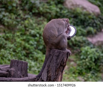 Funny monkey in the mirror. Setting the position of the mirror.