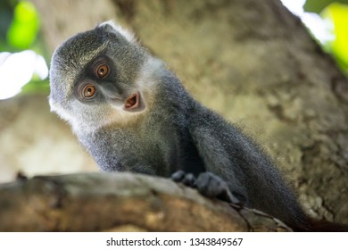 funny monkey on tree branch in green forest