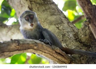 funny monkey sit on tree brunch