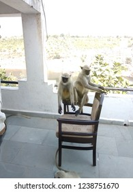 funny monkeys on chair