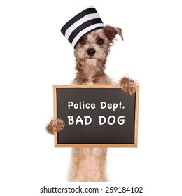 Funny mugshot image of a bad dog wearing a prisoner hat holding a booking sign