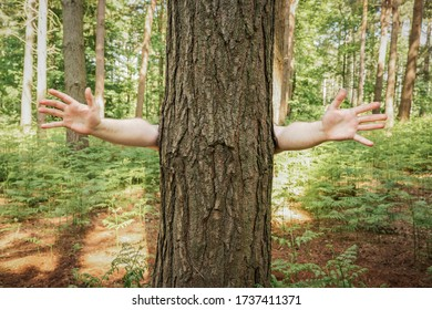 funny nature image of a tree in a woodland setting with arms raised ready to be hugged by a tree hugger with copy space