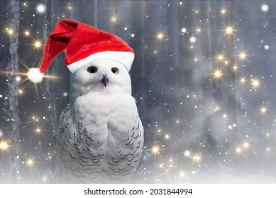 Funny new year polar owl in red Santa hat perch on magic dark forest background with falling stars.Arctic white owl with yellow eyes close up.Predatory bird in wild nature habitat in winter.Copy space