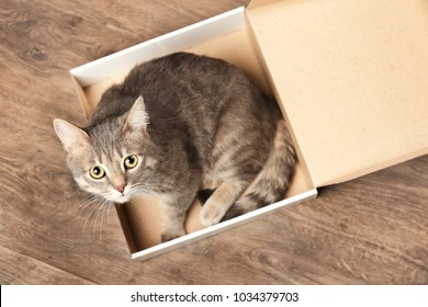 Funny overweight cat in pizza box on wooden floor