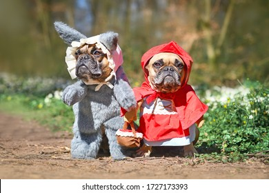 Funny pair of French Bulldog dogs dressed up as fairytale characters Little Red Riding Hood and Big Bad Wolf with full body costumes with fake arms standing in forest