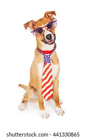 Funny patriotic dog wearing American flag necktie and sunglasses