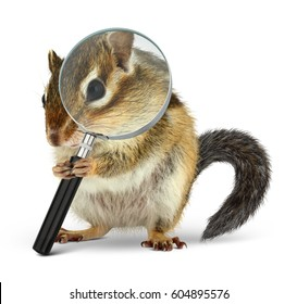 Funny pet chipmunk searching with  loupe, on white