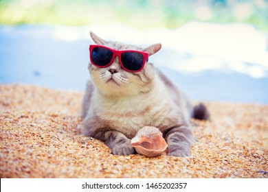 Funny pet outdoors. Portrait of cat wearing sunglasses lying on the beach. Cat holding sea shell