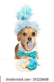 Funny photo of a Chihuahua dog wearing a party hat sticking his tongue out with blue stains from frosting of a half eaten cupcake