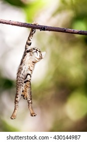 Funny photo of cute kitten hanging from a tree branch by one arm