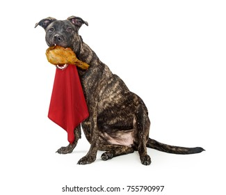 Funny photo of dog eating a turkey leg while wearing a red napkin on neck with fat, extended belly exposed