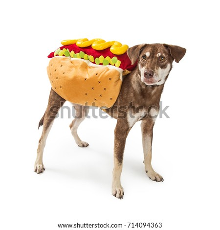 Funny Photo Dog Wearing Hot Dog Stock Photo Edit Now 714094363
