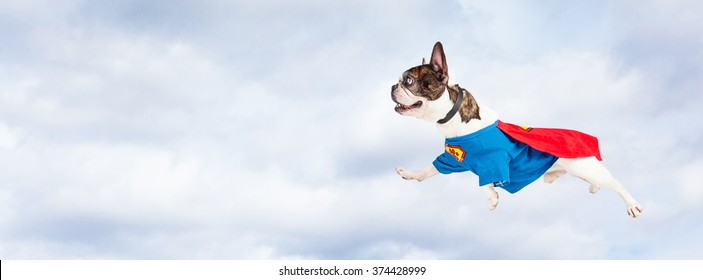 Funny photo of French Bulldog breed dog wearing super hero costume flying through clouds in the sky